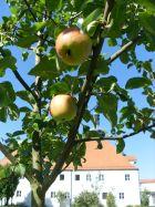 Apfelbaum mit Kloster
