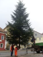 christbaum in neukirchen b. Hl. Blut
